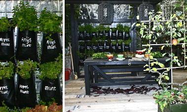 Tuinieren terras planten droomhome interieur woonsite - Groenten in potten op balkons ...