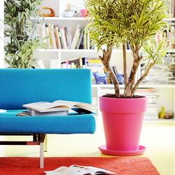 Trendy planten