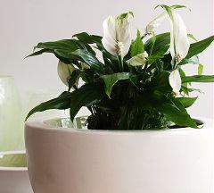 Planten luchtvochtigheid