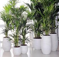 Makkelijke kamerplant