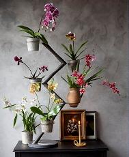 Decoratie Planten Binnen.Trendy Planten Interieur Droomhome Interieur Woonsite