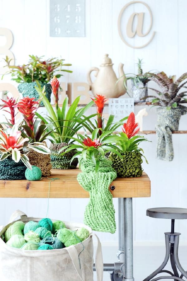Bruisende Bromelia's - Exotische Planten in Huis