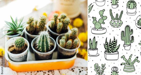 Welke kamerplanten in jouw interieurstijl droomhome interieur
