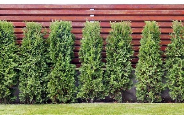Groene Afscheiding Tuin : Welke haagplant past bij jouw tuin droomhome interieur woonsite