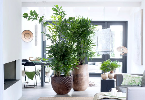 Trendy planten interieur droomhome interieur woonsite for Hippe planten
