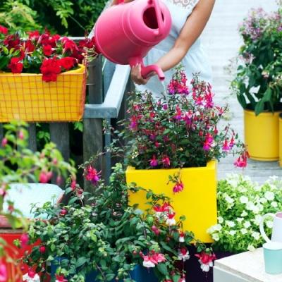 Fuchsia Balkonplant van het Jaar 2015